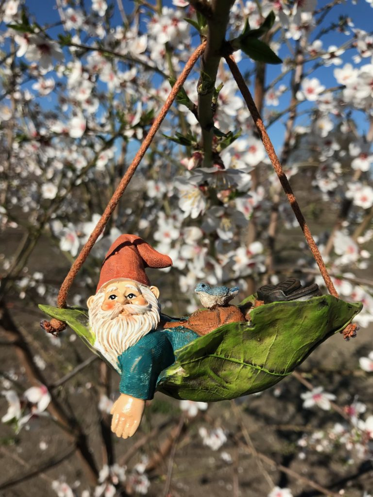 Harley almond bloom