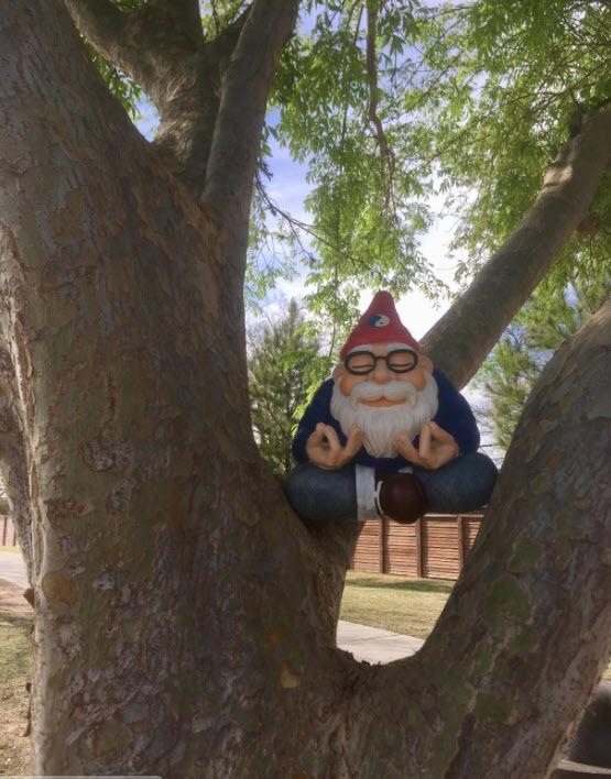 Ohm Gnome In Tree 5-8-18